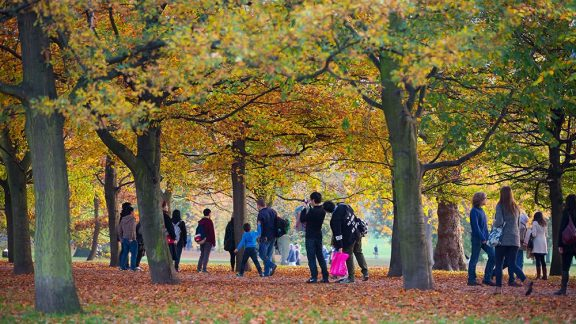 people enjoying the trees in a park